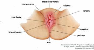 Vulvodinia - Unitat de Dolor Crònic, Fibromialgia i Vulvodinia Dexeus